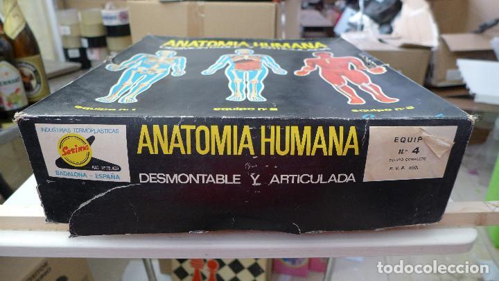 Juegos educativos: ANATOMIA HUMANA DESMONTABLE Y ARTICULADA EQUIPO Nº 4 DE SERIMA NUEVO SIN USAR - Foto 5 - 196662476