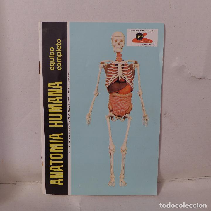 Juegos educativos: ANATOMIA HUMANA DESMONTABLE Y ARTICULADA EQUIPO Nº 4 DE SERIMA NUEVO SIN USAR - Foto 13 - 196662476