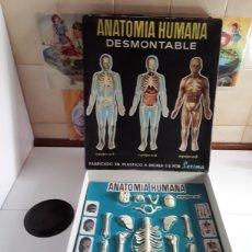 Juegos educativos: ANATOMÍA HUMANA DESMONTABLE Y ARTICULADA,EQUIPO N°1 (SERMA). Lote 203767617