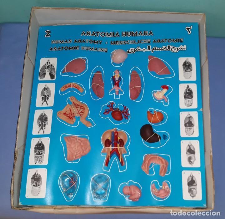 Juegos educativos: ANTIGUA CAJA GRANDE LA MUJER EL EMBARAZO ANATOMIA HUMANA DE SERIMA COMPLETO ORIGINAL - Foto 4 - 206145412