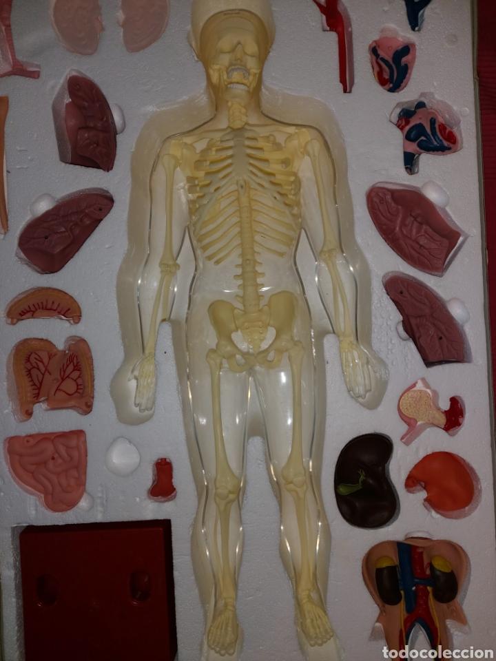 Juegos educativos: Juego anatomía humana Serima grande - Foto 3 - 206573235