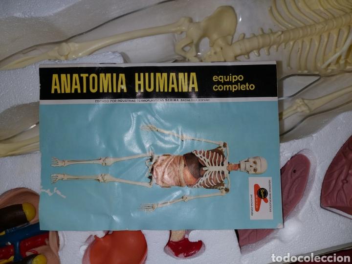 Juegos educativos: Juego anatomía humana Serima grande - Foto 4 - 206573235