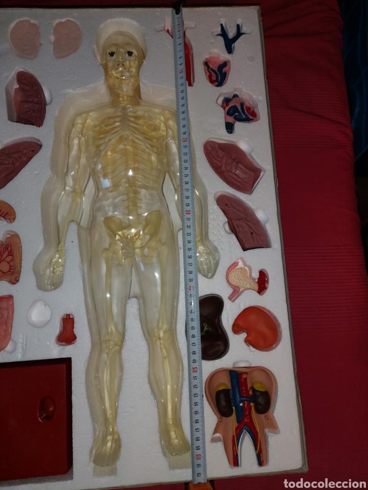 Juegos educativos: Juego anatomía humana Serima grande - Foto 5 - 206573235