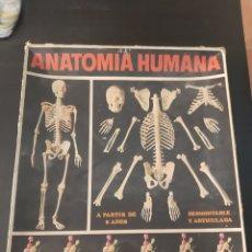 Juegos educativos: ANTIGUO JUEGO DE ANATOMIA HUNANA SERIMA EQUIPO N°1 ESQUELETO AÑO 60-70. Lote 207015066