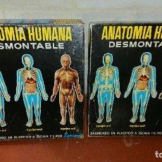 Jeux éducatifs: SERIMA , ANATOMIA HUMANA EQUIPO 1 Y 2. Lote 240284500