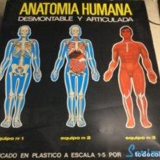 Jeux éducatifs: ANATOMÍA HUMANA - SIREMA - ( MUY NUEVO Y TODAS SUS PIEZAS ). Lote 241424670
