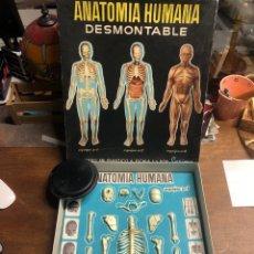 Juegos educativos: ANATOMÍA HUMANA DESMONTABLE Y ARTICULADA EQUIPO NÚMERO 1 (SERMA)(TAL Y COMO SE VE EN LAS FOTOS). Lote 245350295