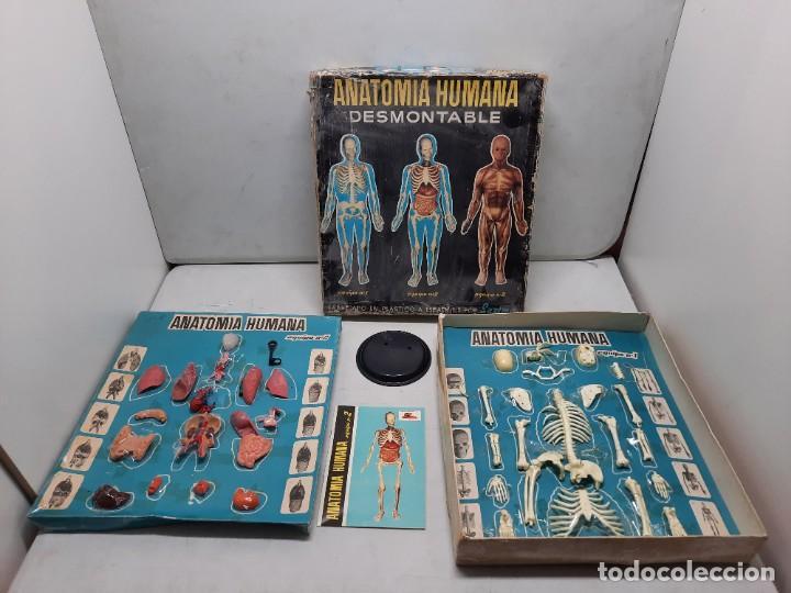 ANATOMIA HUMAMA DESMONTABLE CUERPO HUMANO (Juguetes - Juegos - Educativos)