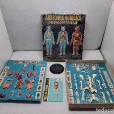 Juegos educativos: ANATOMIA HUMAMA DESMONTABLE CUERPO HUMANO. Lote 252536710