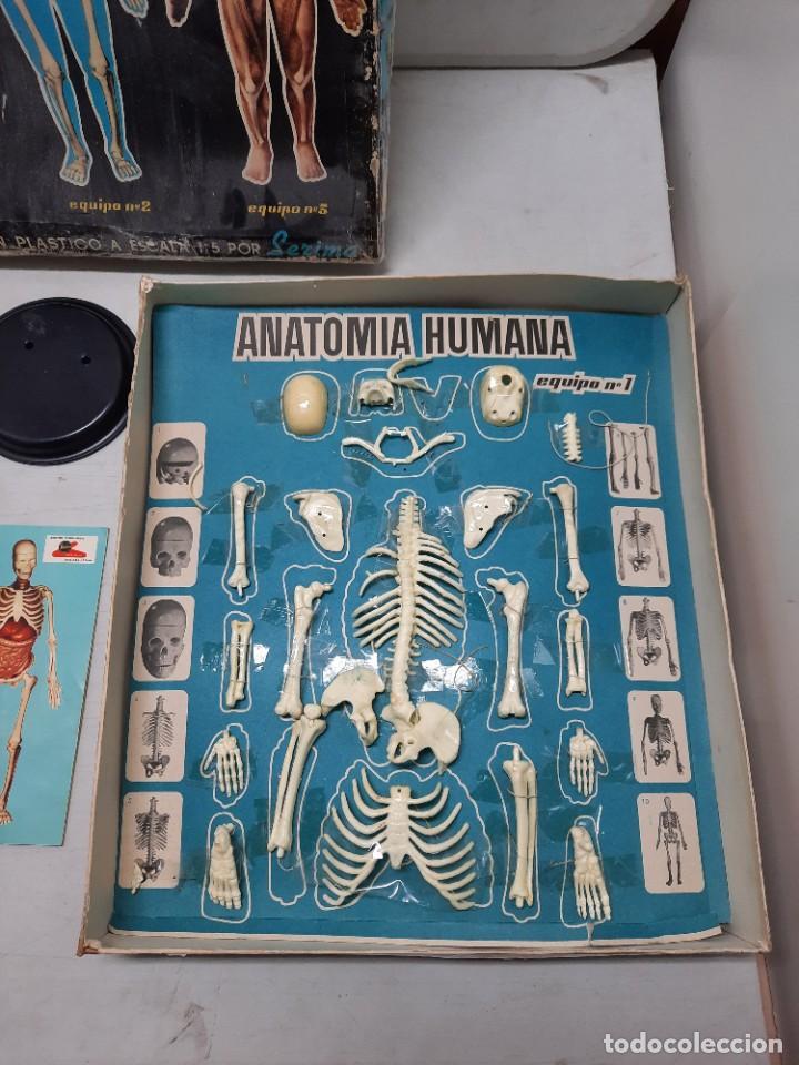 Juegos educativos: ANATOMIA HUMAMA DESMONTABLE CUERPO HUMANO - Foto 2 - 252536710