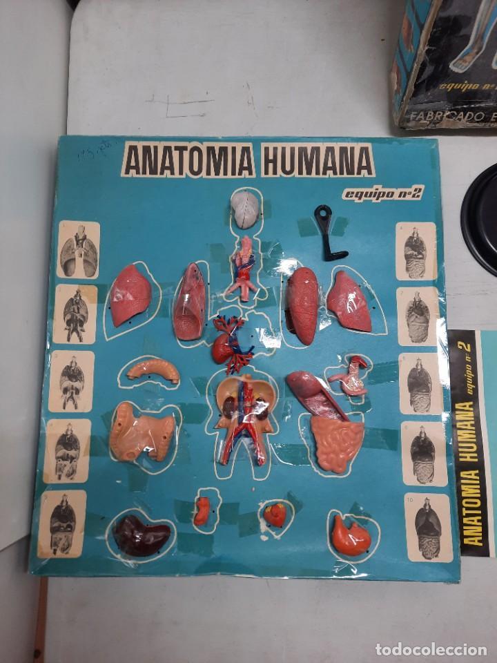 Juegos educativos: ANATOMIA HUMAMA DESMONTABLE CUERPO HUMANO - Foto 3 - 252536710
