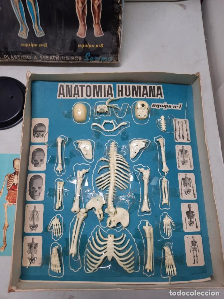 Juegos educativos: ANATOMIA HUMAMA DESMONTABLE CUERPO HUMANO - Foto 6 - 252536710