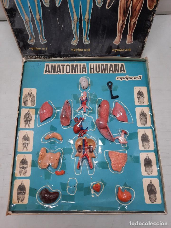 Juegos educativos: ANATOMIA HUMAMA DESMONTABLE CUERPO HUMANO - Foto 7 - 252536710
