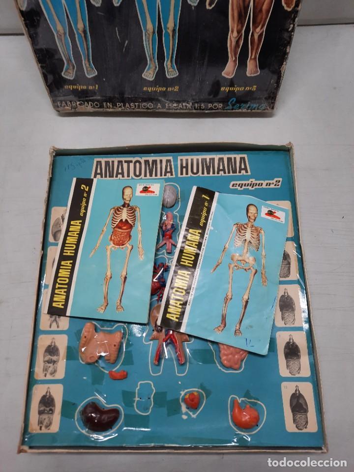 Juegos educativos: ANATOMIA HUMAMA DESMONTABLE CUERPO HUMANO - Foto 8 - 252536710