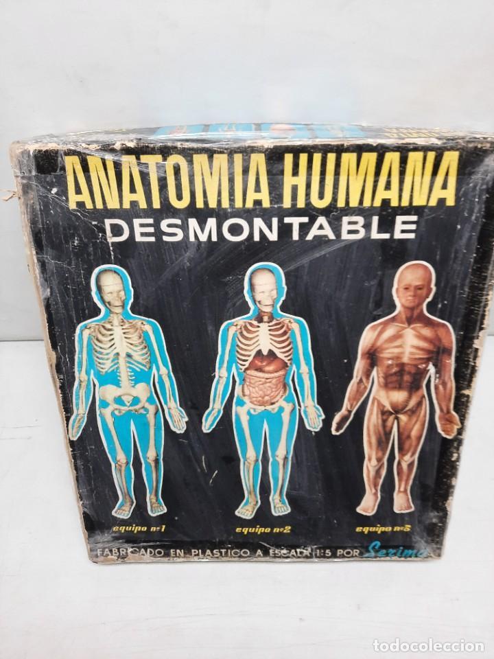 Juegos educativos: ANATOMIA HUMAMA DESMONTABLE CUERPO HUMANO - Foto 13 - 252536710
