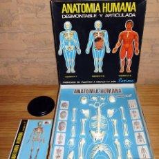 Giochi educativi: ANTIGUA ANATOMIA HUMANA DE SERIMA EQUIPO 1 ESQUELETO - NUEVO - COMPLETO - PERFECTO ESTADO. Lote 263668325