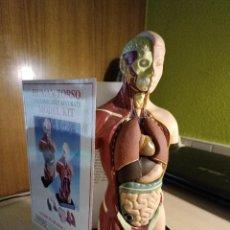 Juegos educativos: HUMAN TORSO EDU SCIENCE TORSO HUMANO DESMONTABLE.. Lote 267718639