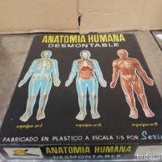 Juegos educativos: ANATOMIA HUMANA SERIMA BADALONA USADA DESMONTABLE-CUERPO HUMANO-ESQUELETO-JUGUETE. Lote 272148528