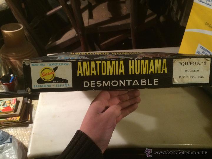antiguo juego / juguete de mesa anatomia humana - Comprar Juegos de ...