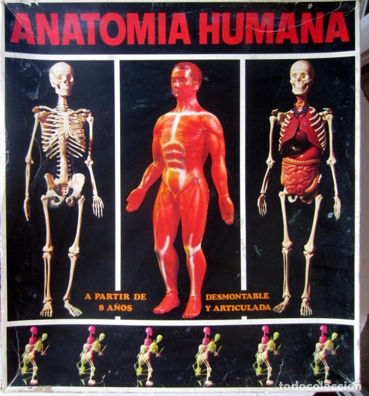 serima anatomia humana nº 4 con su caja en muy - Comprar Juegos de ...