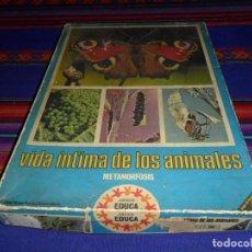 Juegos de mesa: VIDA ÍNTIMA DE LOS ANIMALES. METAMORFOSIS. JUEGOS EDUCA. COMPLETO CON INSTRUCCIONES. MUY RARO.. Lote 117531511