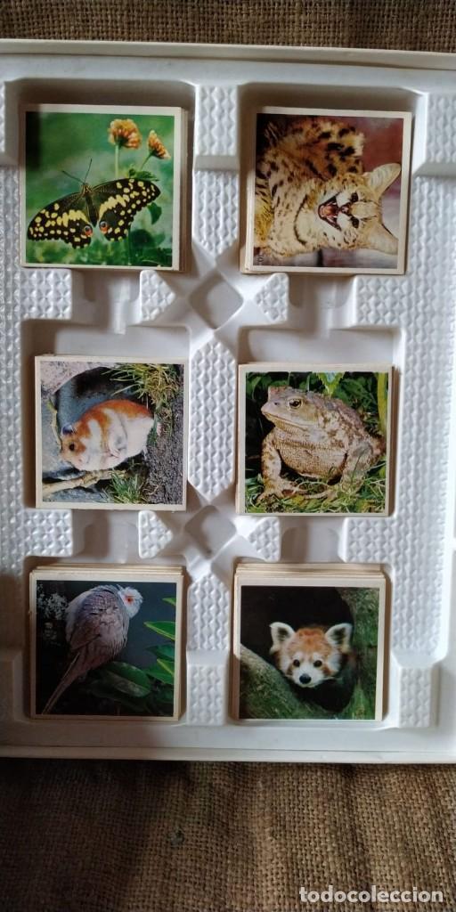 Juegos de mesa: JUEGO EDUCA, LOTO DE ANIMALES. - Foto 2 - 211702776