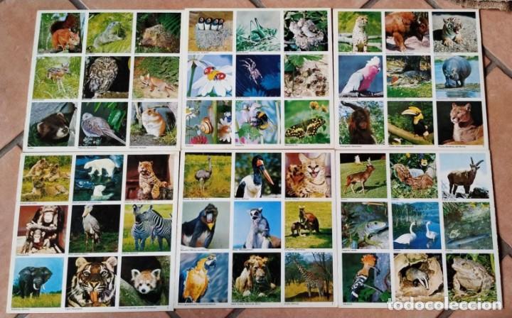 Juegos de mesa: JUEGO EDUCA, LOTO DE ANIMALES. - Foto 3 - 211702776