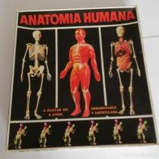 Juegos de mesa: ANATOMIA HUMANA EQUIPO Nº2, EN CAJA. CC. Lote 245546520