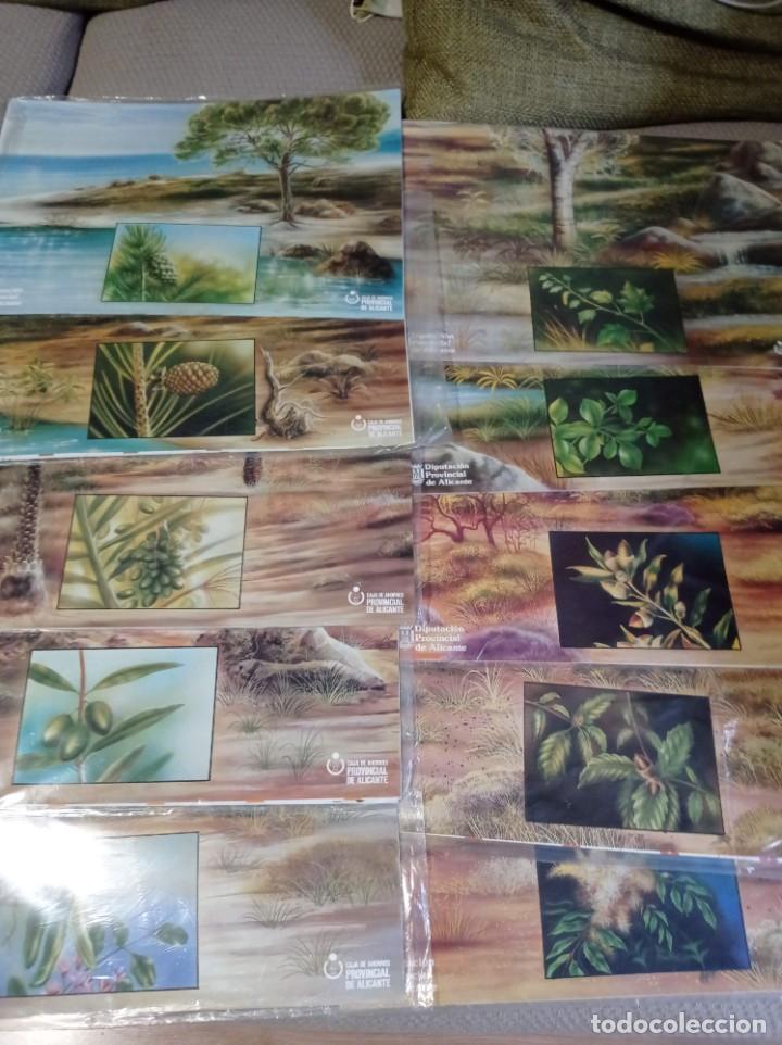 Juegos de mesa: JUEGO DE MESA CON 360 FICHAS DE ARBOLES DE LA DIPUTACION DE ALICANTE COMPLETO - Foto 2 - 262651755