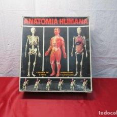 Juegos de mesa: JUEGO EDUCATIVO ANATOMIA HUMANA. Lote 269065873