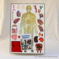 Juguetes antiguos y Juegos de colección: ANATOMIA HUMANA DE SERIMA. Lote 33091544