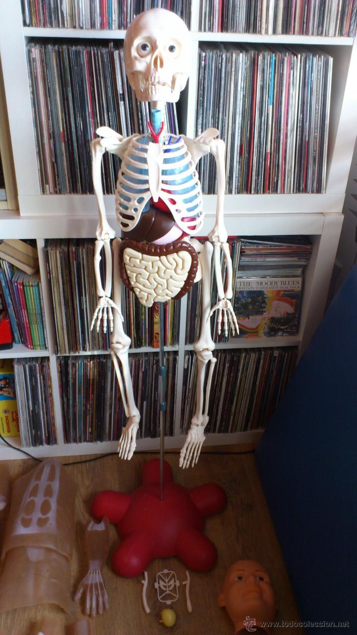 esqueleto humano de plastico para estudio de an - Comprar en ...