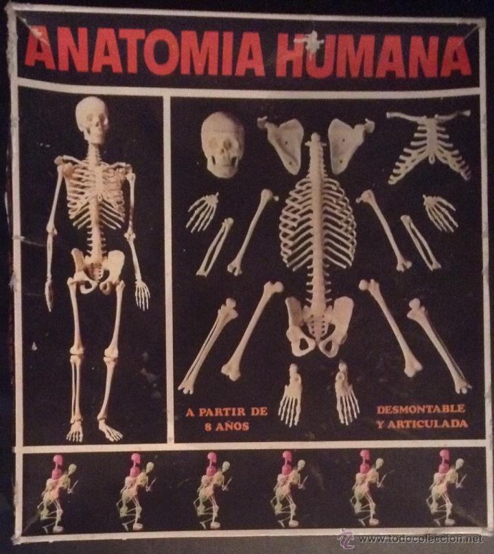 antiguo juego de serima anatomia humana equipo - Comprar en ...