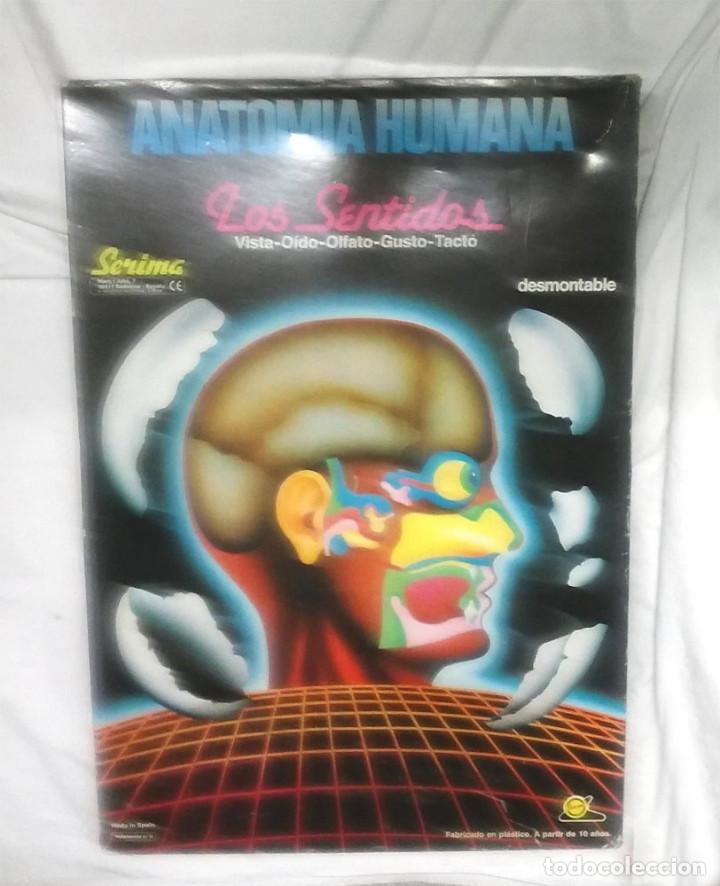 los cinco sentidos anatomia humana de serima ba - Comprar en ...