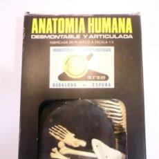 Juguetes antiguos y Juegos de colección: ANATOMIA HUMANA - EQUIPO 1 ESQUELETO - CAJA PEQUEÑA - COMPLETA. Lote 178356825