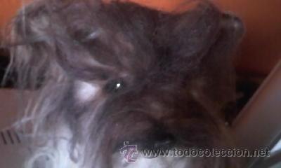 Juguetes Antiguos: Antiguo perro yorkshire de peluche ojos de cristal. 1965. KAMAR JAPAN - Foto 4 - 37772782
