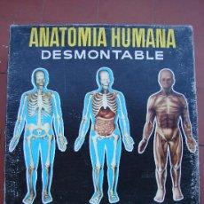 Juguetes antiguos: ANATOMIA HUMANA. MARCA SERIAM. EQUIPO 4. Lote 29581935