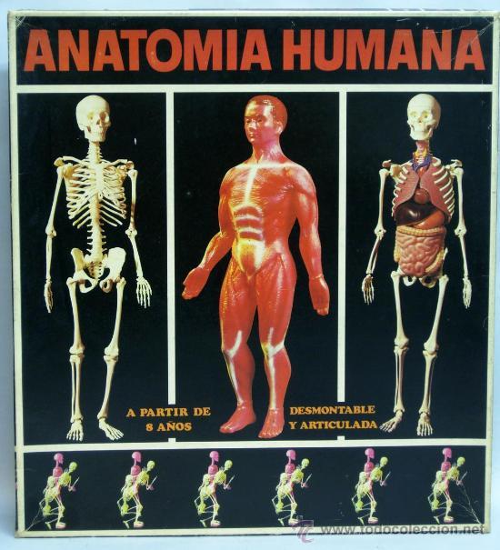 anatomía humana serima músculos desmontable y a - Comprar Juguetes ...