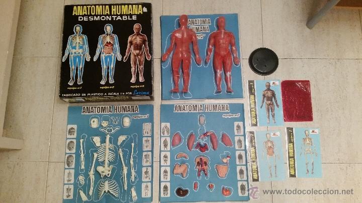 equipo completo anatomia humana de serima desmo - Comprar Juguetes ...