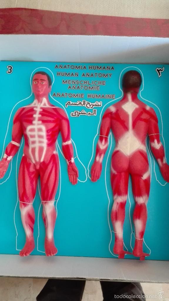 Encantador Foto De La Anatomía Humana Regalo - Imágenes de Anatomía ...