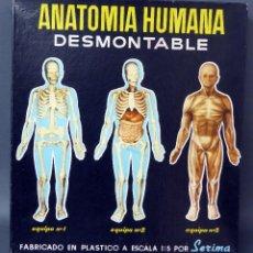 Juguetes antiguos: ANATOMÍA HUMANA DESMONTABLE SERIMA EQUIPO Nº 1 HUESOS CON BASE AÑOS 60. Lote 57302090
