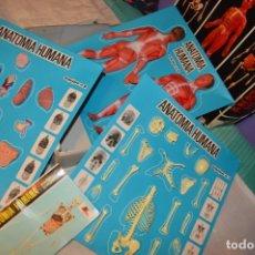 Juguetes antiguos: ANTIGUO JUEGO ANATOMÍA HUMANA SERIMA, EQUIPO Nº 4, COMPLETO Y CASI SIN USO - EN CAJA - ENVÍO 24H. Lote 171161149