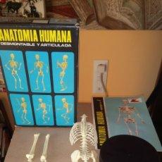 Juguetes antiguos: CAJA PEQUEÑA DE ANATOMÍA HUMANA DE SERIMA. 1963. EQUIPO NÚMERO 1 ESQUELETO.. Lote 180992145