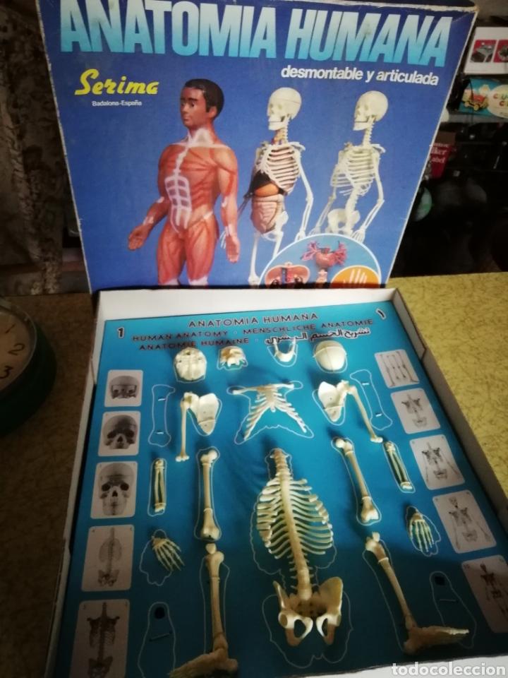Único Comprar Modelos De Anatomía Componente - Imágenes de Anatomía ...