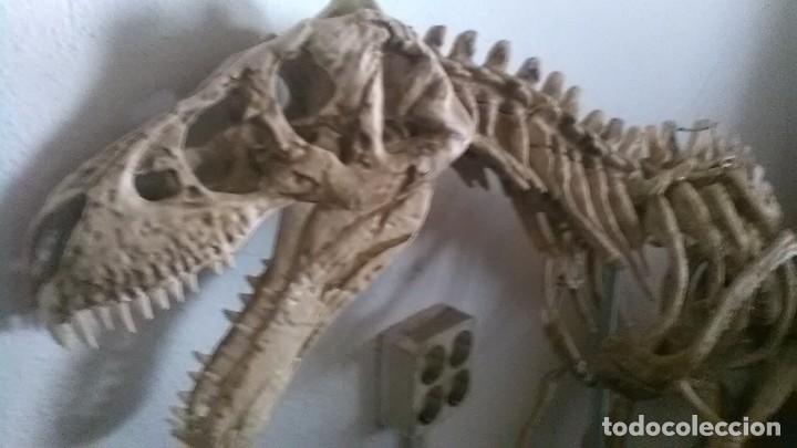 Modelos a escala: Dinosaurio, grandes dimensiones palentologia - Foto 2 - 248002635