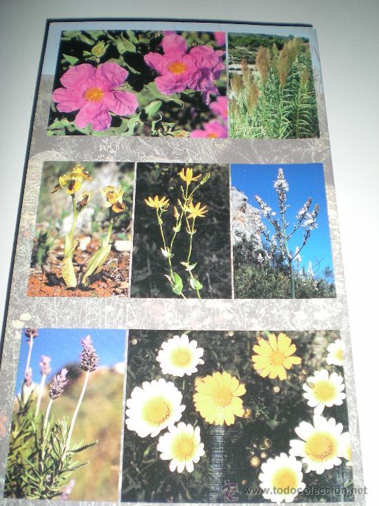 Libros: libro en aleman plantas en su habitad de la costa blanca pflanzen in ihren lebensraumen an der cos - Foto 3 - 33516868