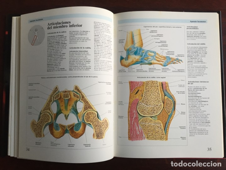 Libros: Atlas de Anatomía. Colección gran enciclopedia de las ciencias. diccionario ilustr del cuerpo humano - Foto 9 - 179538520