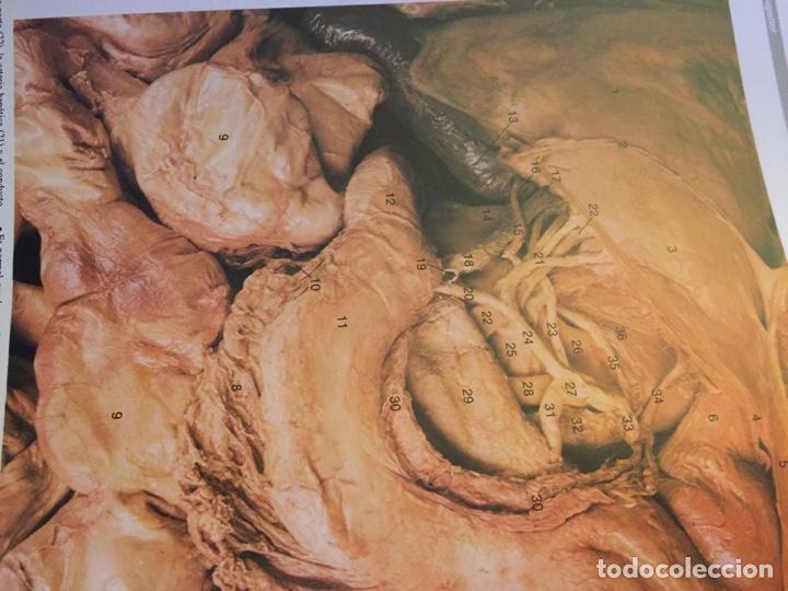 Libros: Gran Atlas de Anatomía Humana 1 y 2 NUEVA EDICIÒN - Foto 5 - 184399305