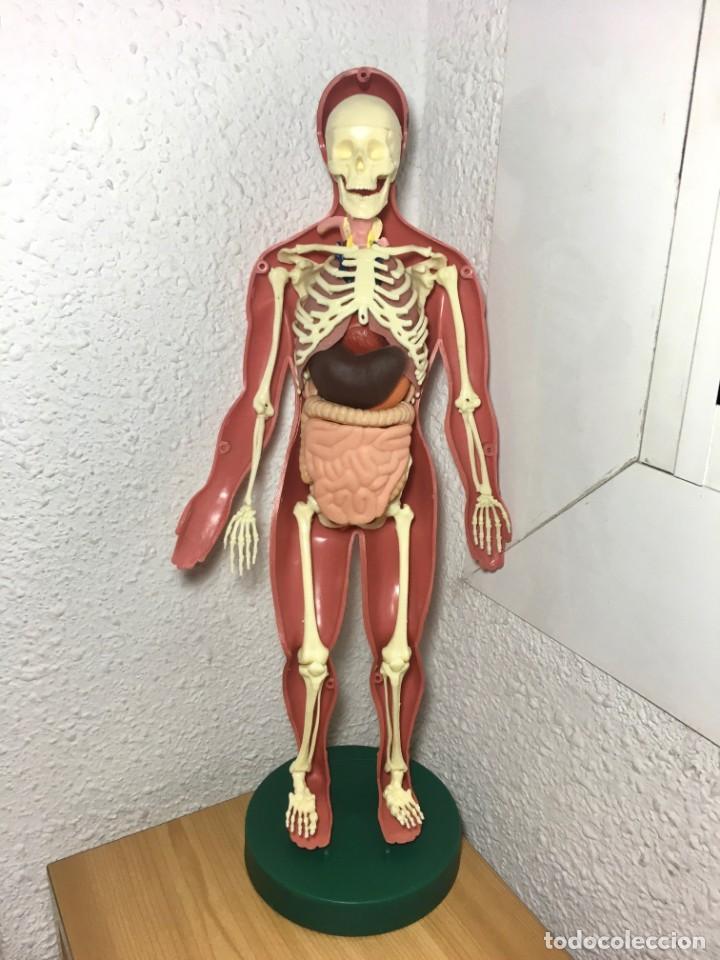 Libros: ERASE UNA VEZ EL CUERPO HUMANO - Atlas anatómico y 2 Cuerpos hombre y mujer - Todo Completo - Foto 4 - 186121976