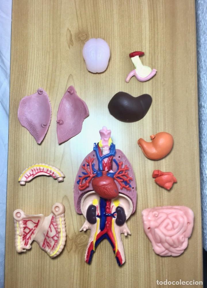 ERASE UNA VEZ EL CUERPO HUMANO - ATLAS ANATÓMICO Y 2 CUERPOS HOMBRE Y MUJER - TODO COMPLETO (Libros Nuevos - Ciencias, Manuales y Oficios - Anatomía )